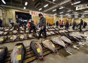 Tokyo Tsukiji Fish MArket - Bluefin tuna is auctioned off here daily to the highest bidder at just one of the many hundreds of fish markets in Japan.