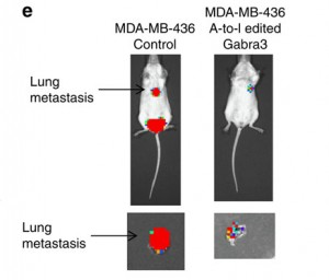 Metastasis in mice 3